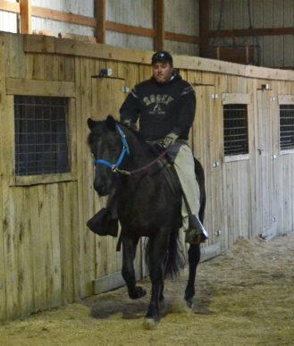 Gaited Morgan Stallion - Westwind Joaquin