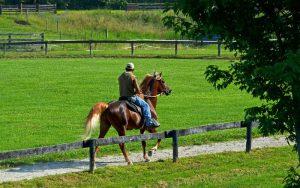 Eastwest Yonder Gaited Morgan Stallion Foundation