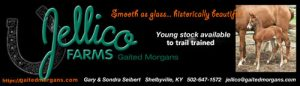 Jellico Farms Young Stock