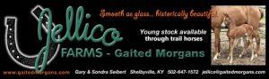 Jellico Farms Gaited Morgans