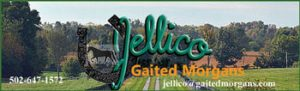 Entrance Jellico Farms Gaited Morgans Shelby County, Kentucky.