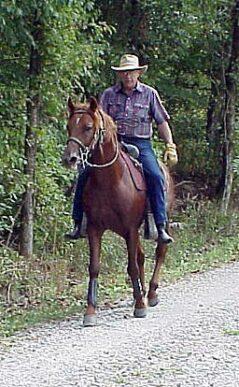 aka Buddy a Gaited Morgan Stallion