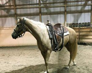mare saddled