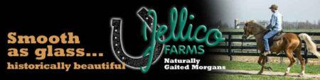 jellico morgans logo