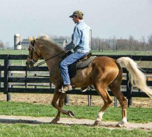 Sundance stallion