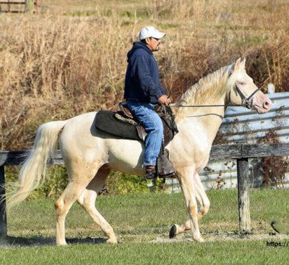 cody stallion